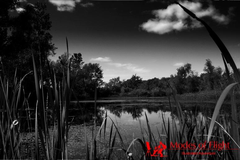 Millgrove Wetlands